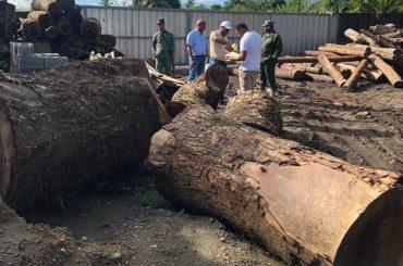 Procuraduría Medio Ambiente realiza  allanamiento en aserradero de Bonao