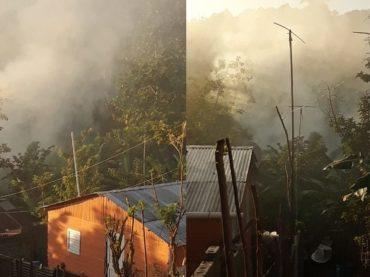 Denuncian tala de bosques en comunidad de Puerto Plata para fabricar carbón